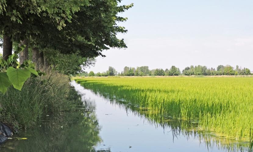 Ecomuseo delle risaie, dei fiumi, del paesaggio rurale mantovano