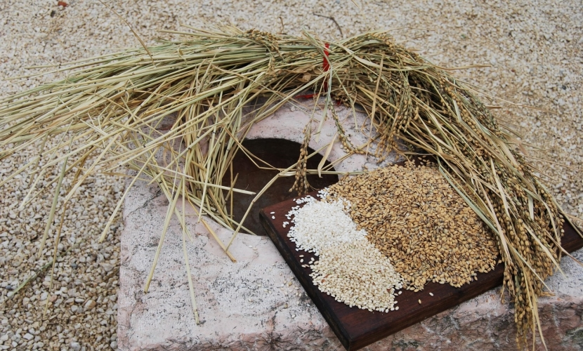 Il riso di Mantova